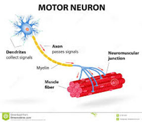 Neurodevelopment Center Neuromuscular Diseases